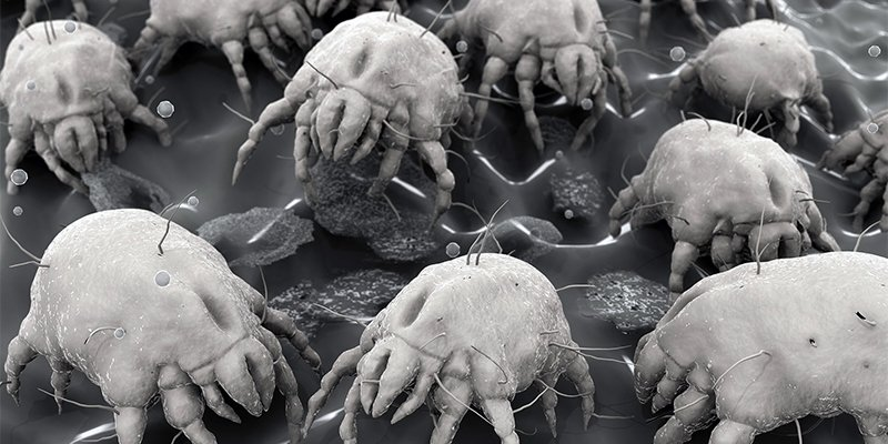 Dust Mites at Home and at Work